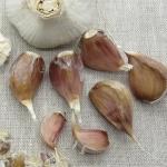 Americky Maly garlic.