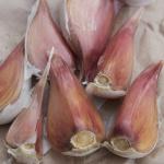 Dunganski garlic