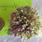Garlic flowerhead