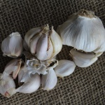 Italian White garlic