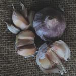 Broken bulb of garlic.