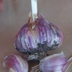 Shandong garlic
