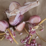 Italian Purple cloves and bulbils
