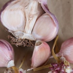 Italian Purple garlic